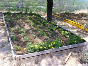 Vegetable garden beds at Agua Viva, El Cenizo, Texas